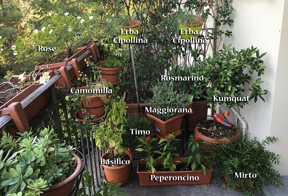 Coltivare le piante per noi e i pappagalli for Piante per terrazzo