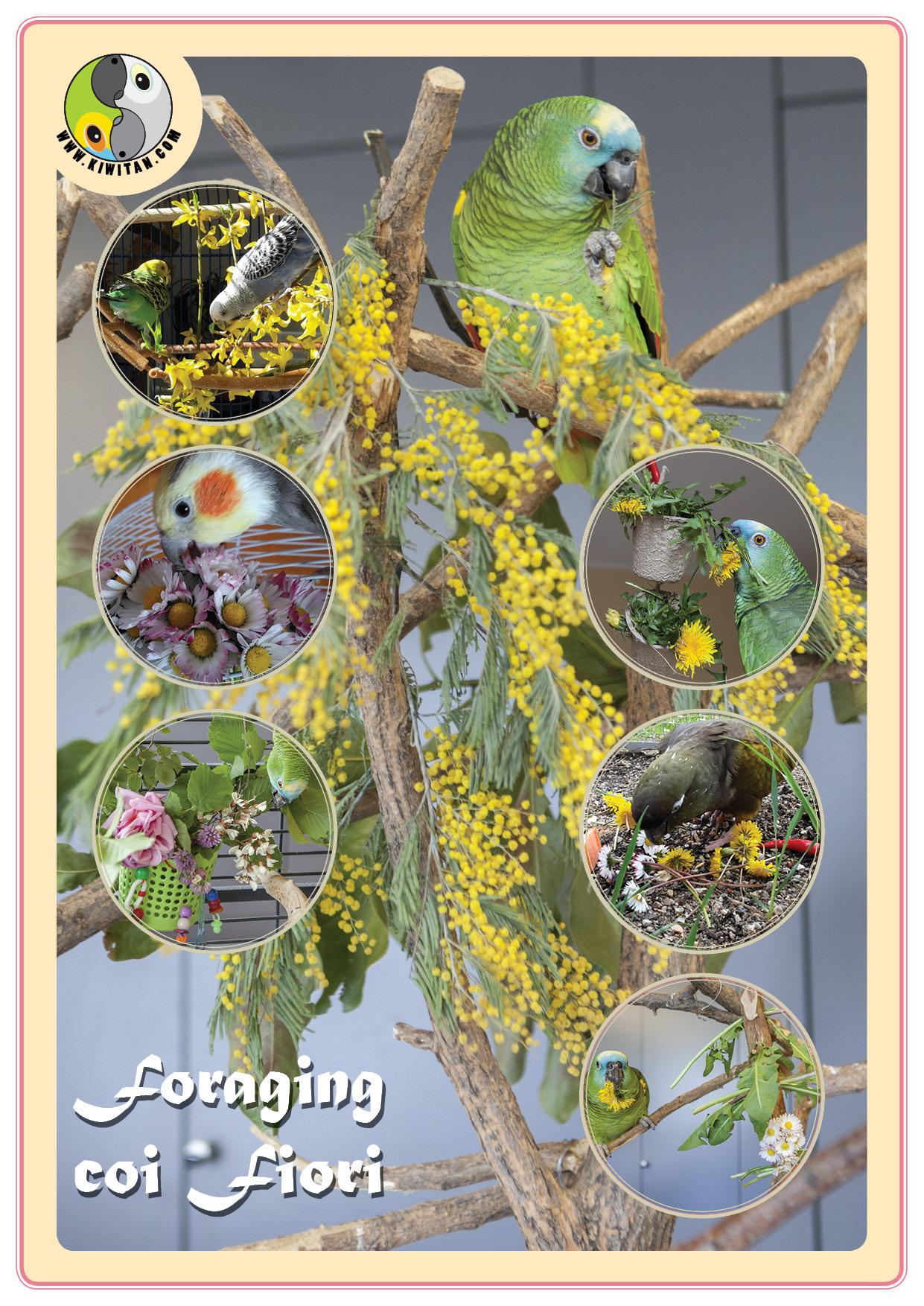 Fiori commestibili. schede piante5