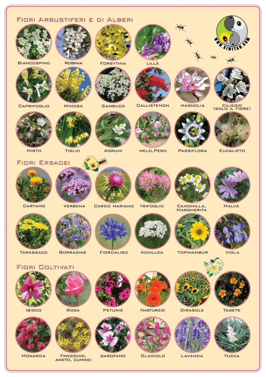 Fiori E Piante Commestibili fiori commestibili